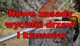 Czytaj więcej o: Zmiany przepisów dotyczących usuwania drzew i krzewów