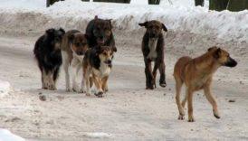 Czytaj więcej o: Konsultacje Gminnego Programu opieki nad zwierzętami bezdomnymi i zapobieganiu bezdomności zwierząt