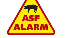 asf111